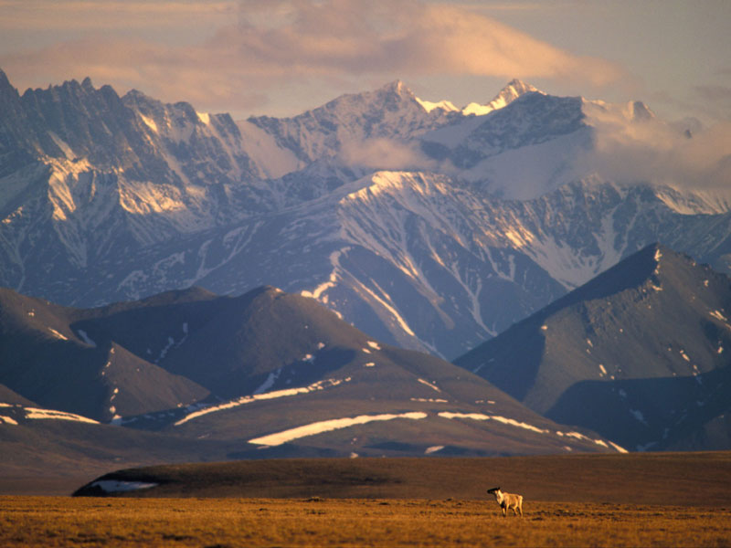 Alaska Land Tour with Arctic Circle Tour | Brooks Range with Caribou
