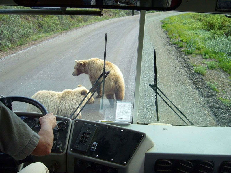 Alaska Land Tour with Arctic Circle Tour | Denali Backcountry Tour Grizzly Tours