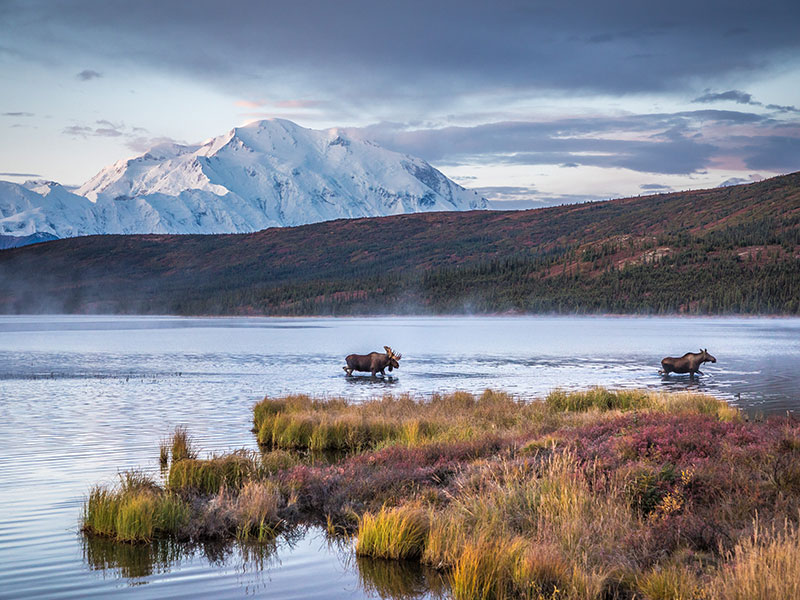 Alaska Stillpoint Lodge with Denali by Train | Denali National Park with Moose