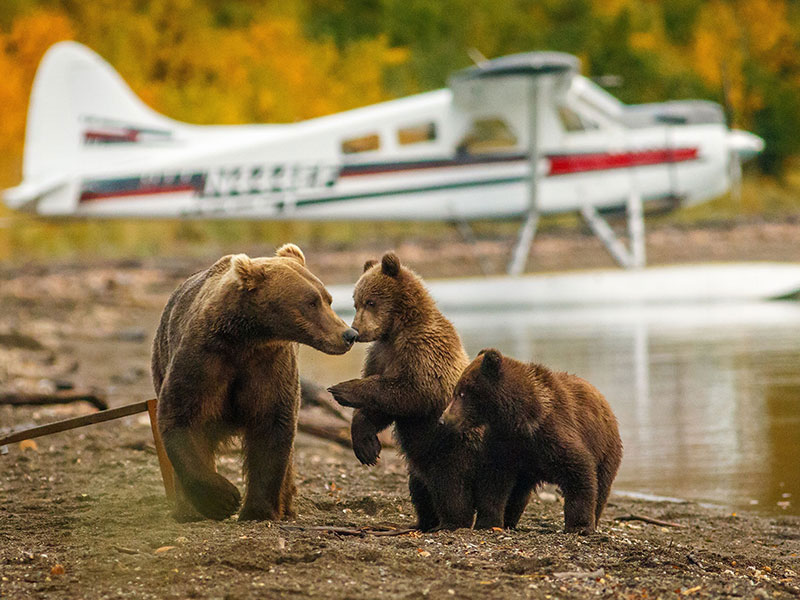 Alaska Stillpoint Lodge with Denali by Train | Katmai Bear Viewing