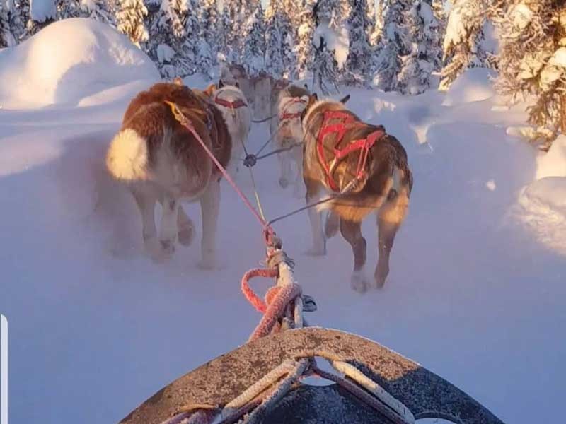 Alaska Aurora Rail Adventure | Bettles Lodge Dog Sledding