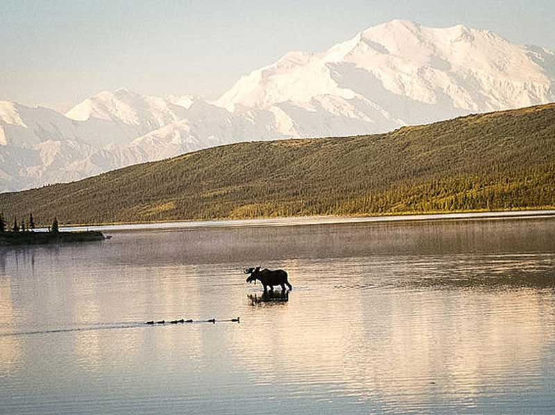 Best of Alaska Rail, Bears & Glaciers | Denali National Park Backcountry Tour